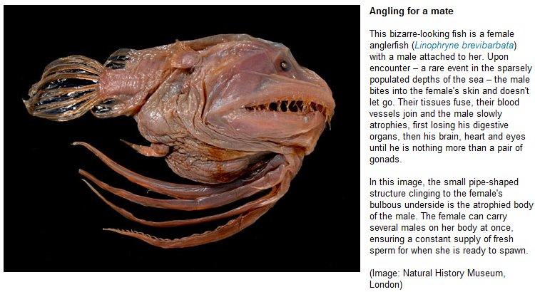 Deep Sea Dragonfish  Deep Sea Creatures on Sea and Sky
